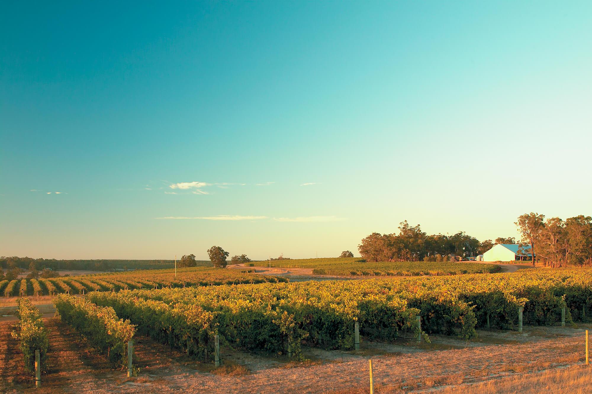 Frankland-Estate-Winery2